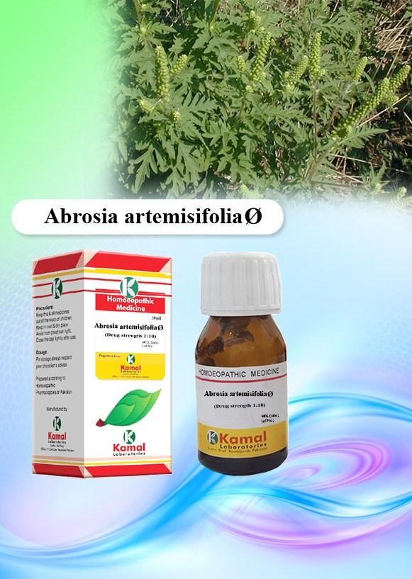 AMBROSIA ARTHEMISIAEFOLIA Ø