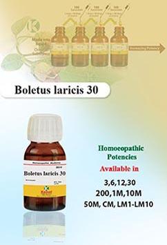 Boletus laricis