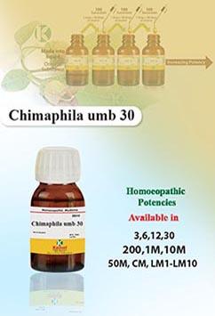 Chimaphila umb