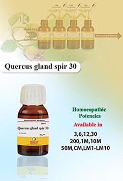 Quecus gland spir